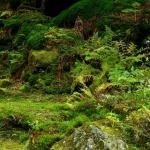 サバイバル-ジャングル