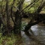 サバイバル-川